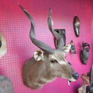 Vintage African kudu antelope taxidermy shoulder mount – $595